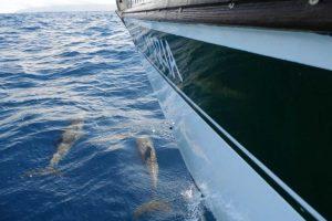 Santa Maria Delfine am Bug