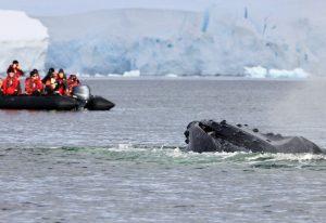 Wal mit Schlauchboot