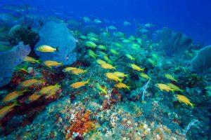 Kuba Unterwasserwelt